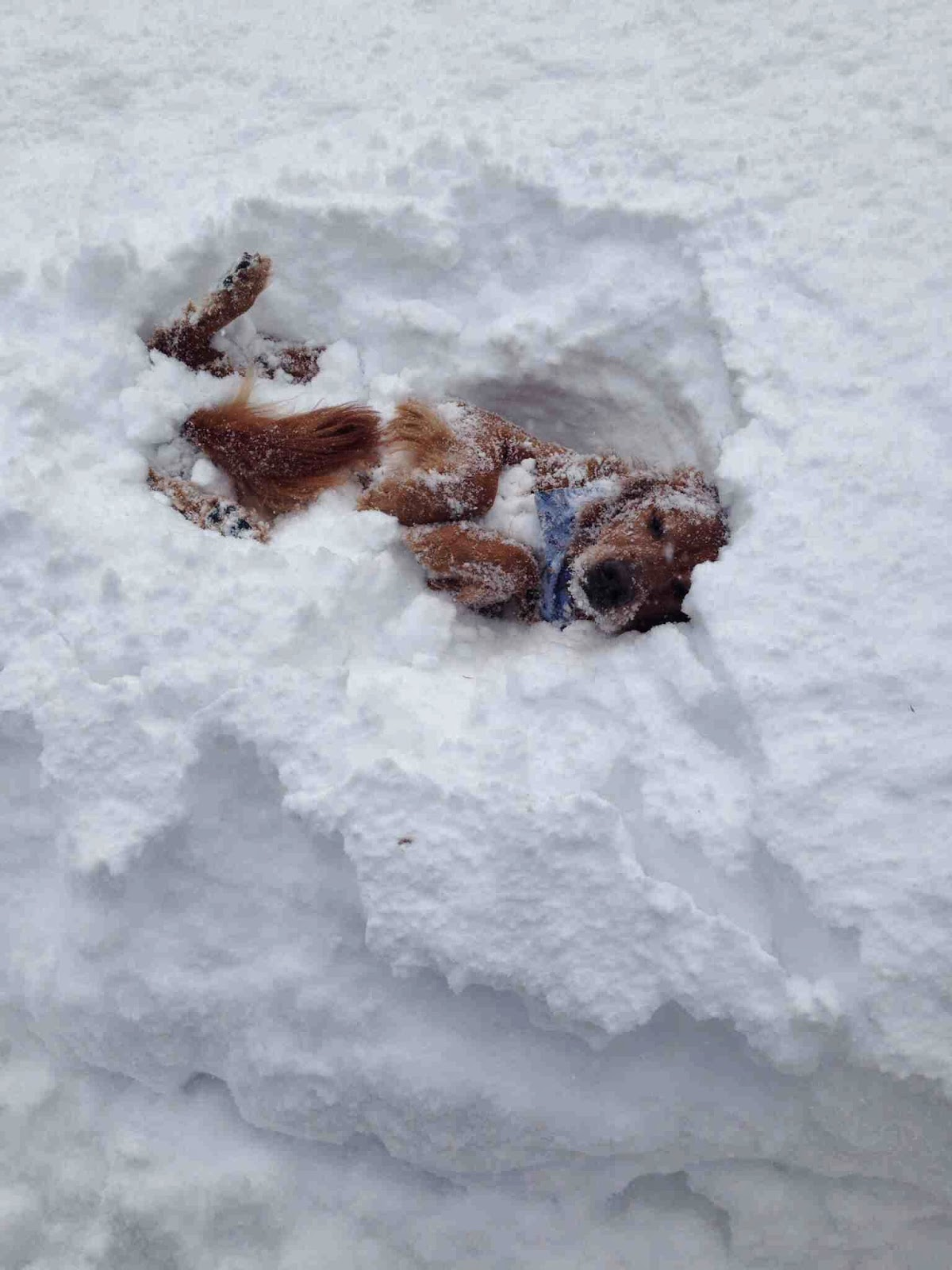 Cute dogs - part 8 (50 pics), dog playing in the snow