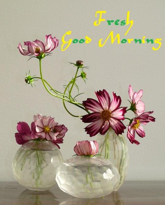 Khushi for life fresh good morning cards wishes photos images fresh good morning cards wishes photos images m4hsunfo
