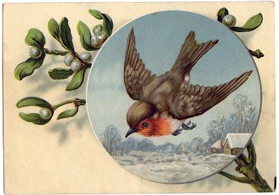 Бесплатная Зимние изображения птиц