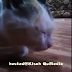 Subhanallah..Kucing Ini Telah Termakan Santau Tuannya,Lihat Apa Berlaku Seterusnya