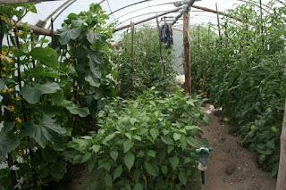 Super productive greenhouse