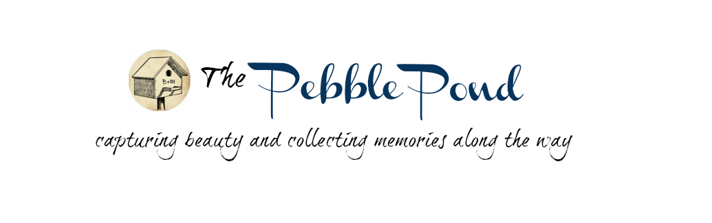 Pebble Pond Journal