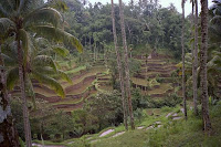Rice Terrace Tegallalang