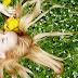 Diez Claves Maestras para una Vida Abundante y Feliz