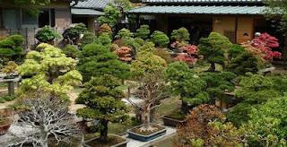 dicas de decoração para jardins