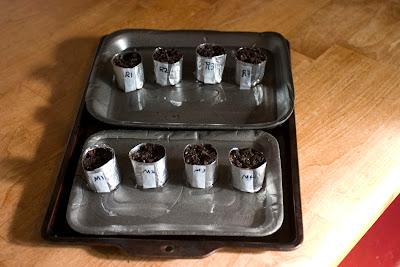 tinfoil planters