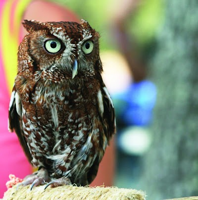 Learn all about owls during Owl Prowls in Michigan state parks