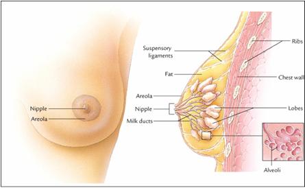 Image Mengobati Tumor Payudara Secara Alami