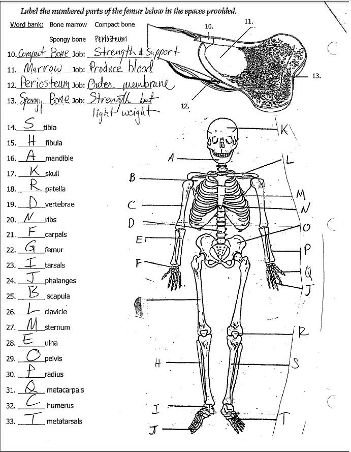 worksheet. Science Worksheets For 7th Grade. Grass Fedjp Worksheet ...
