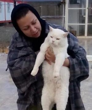 پناهگاه گربه ها به آتش کشیده شده