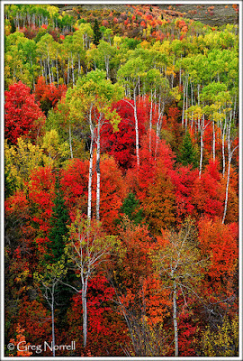 http://photoartresource.com/featured/idaho-autumn-greg-norrell.html