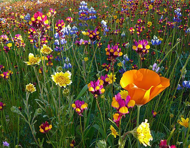 Wildflower Garden Ideas gartengestaltungsideen Garden Design With Thyme For Herbs Wildflower Seeds With Landscape Grasses From Thymeforherbscom