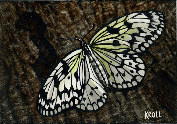 Butterfly scratchboard - photo#26
