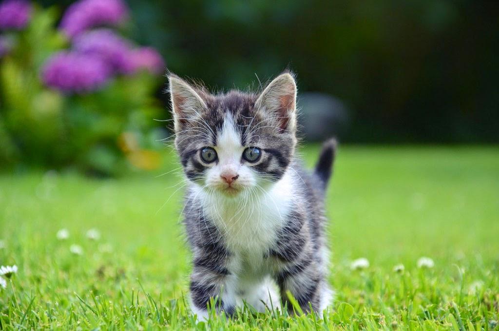 ... gatos e animais de estima