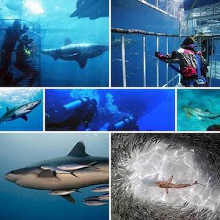 Top 3 Lugares para nadar con Tiburones