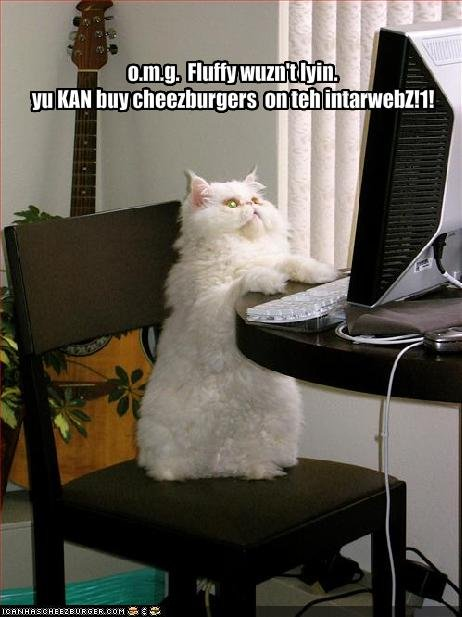cat funny. cheeseburer funny cat pictures