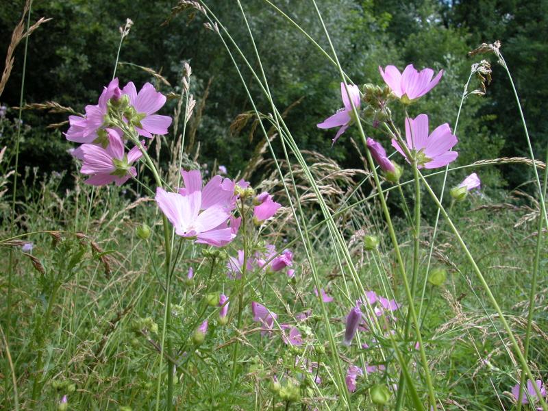 Les petites herbes prochaine sortie botanique le 9 ao t for Sortie famille 78
