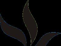 Profil Universitas Kristen Papua