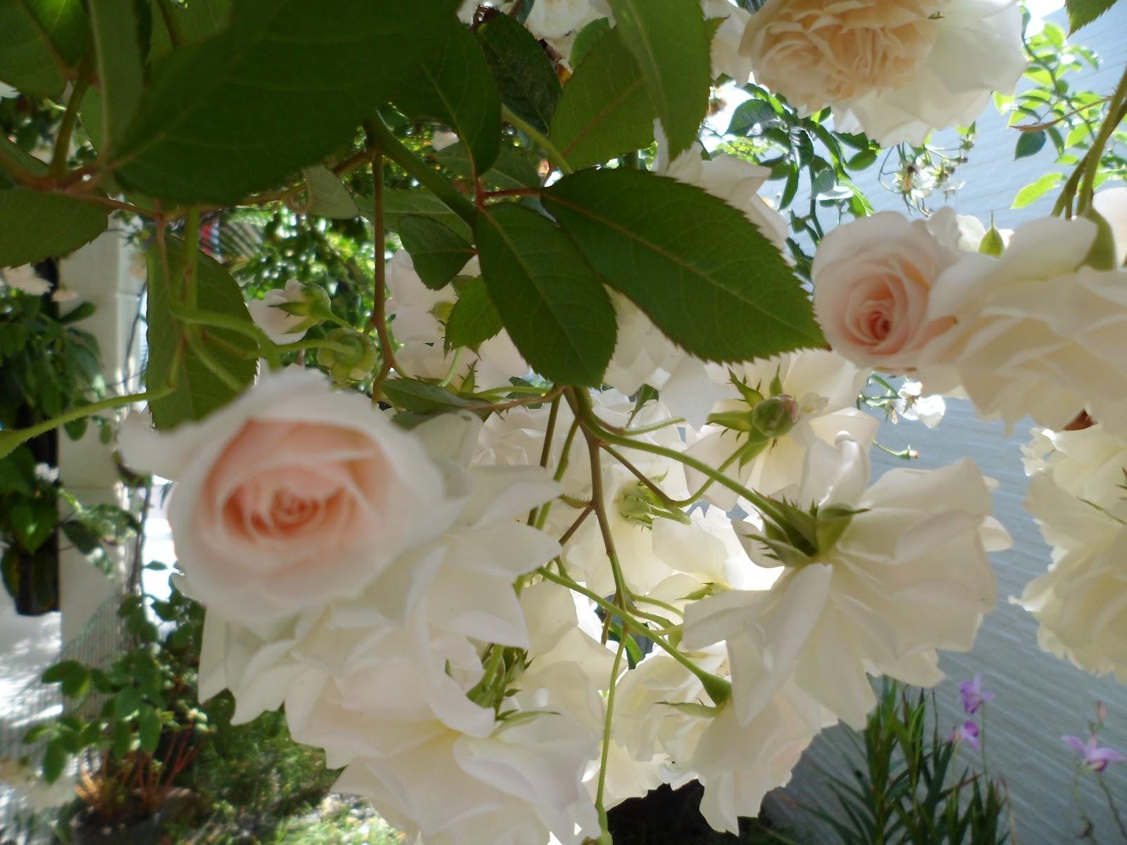 flores no jardim letra:RoAguiar: MEU JARDIM TEM RECICLAGEM – AMO MUITO TUDO ISSO!