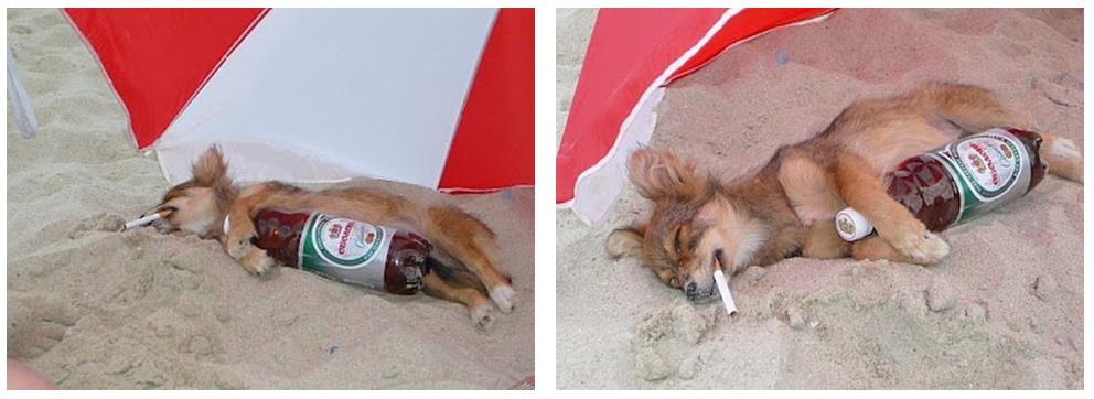 Can Humans Eat Cesar Dog Food