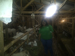 Kunjungan ke Mandiri Farm 28 Agustus 2012
