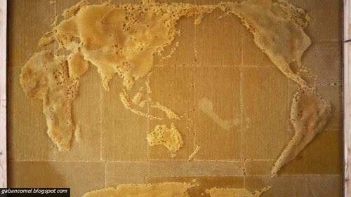Menakjubkan Peta Dunia Ini Dihasilkan Oleh Lebah