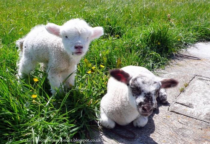 Poppy and Bertie enjoying the New Zealand Spring sunlight