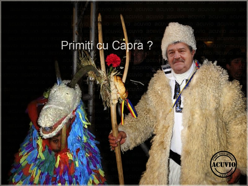 Toni Greblă Capra funny photo