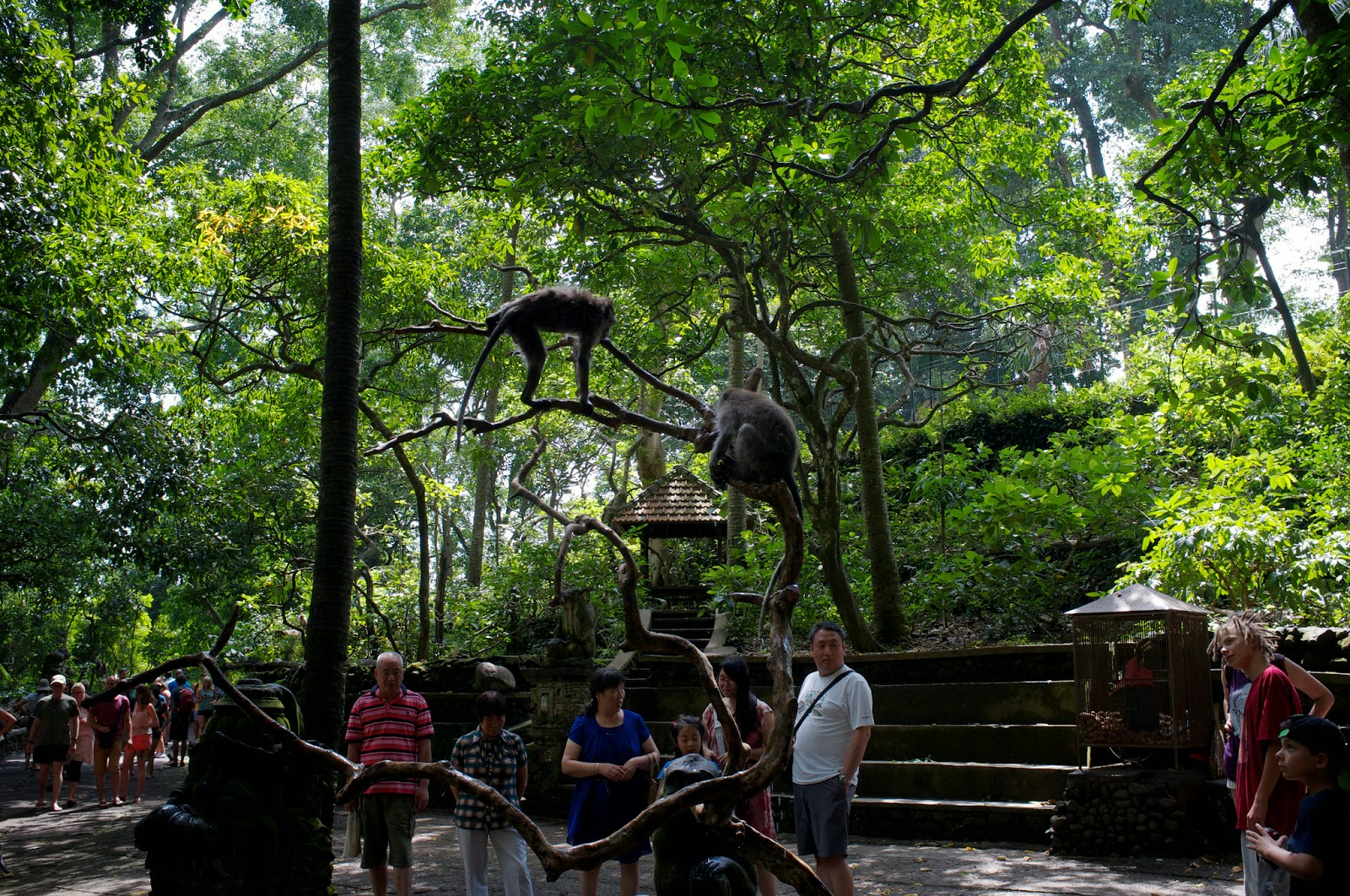 Monkey Forest at Ubud Bali