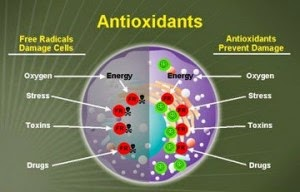 free radicals vs. antioxidants