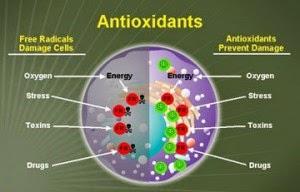 free radicals vs. antioxidants
