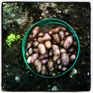 The late early crop saved us in the #wartimegarden