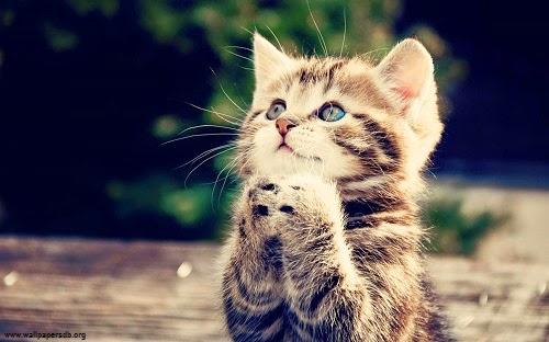 Une magnifique  photo chat mignon