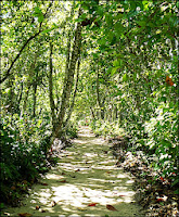 long trail in cahuita national park