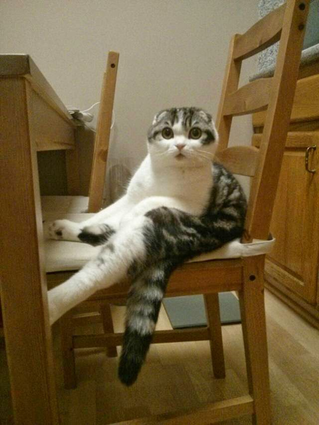 Cats Sitting in Unusual and Silly Positions
