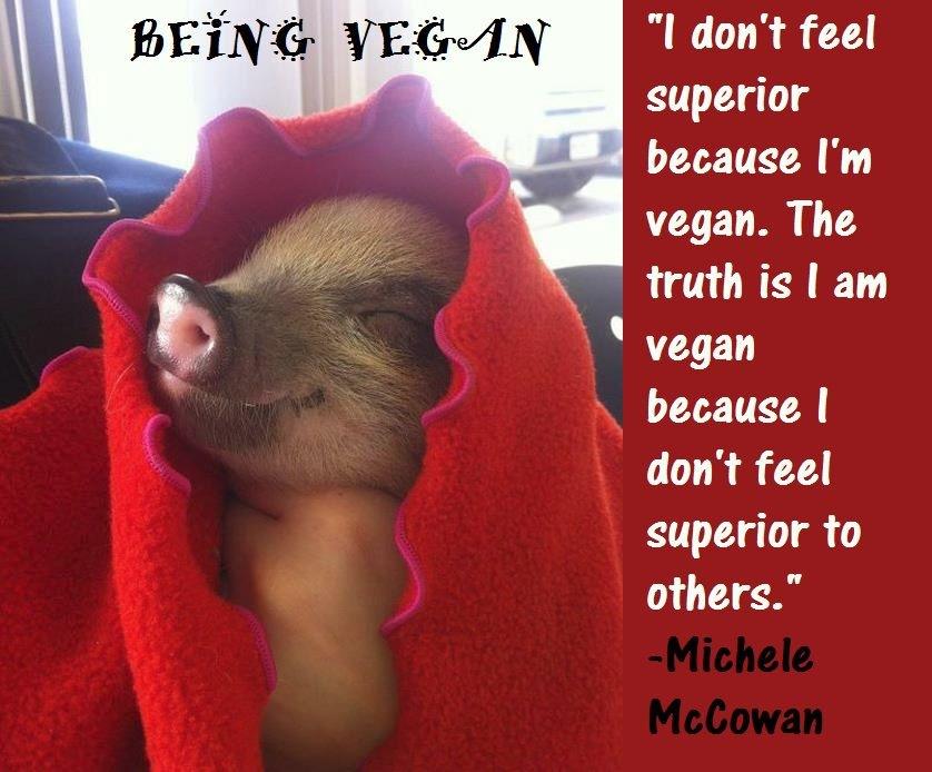 Vegan Quotes II Meat Meets Vegan New Vegan Quotes