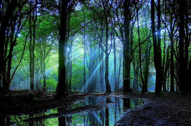 scenery woods trees water