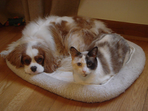 cuteu0026ampcool pets 4u cute cats and dogs pictures cats dogs 500x375