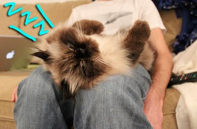 cat-belly-03
