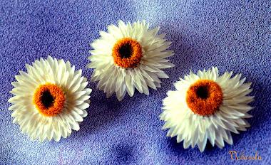 De flores y amigas