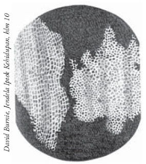 Irisan melintang gabus batang tumbuhan yang diamati Hooke