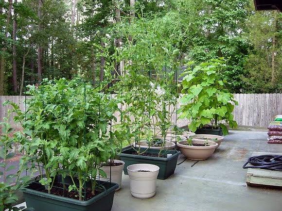 merawat-tanaman-pot