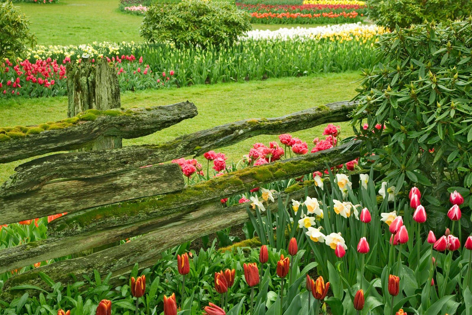 Beautiful Garden Of Flowers : Beautiful flower garden forest cool wallpapers wonderful