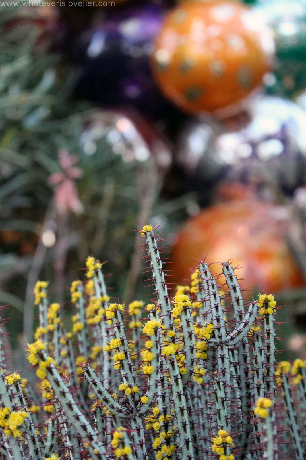 Local Love: Chihuly at the Desert Botanical Garden