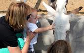 Hee Haw Petting Zoo