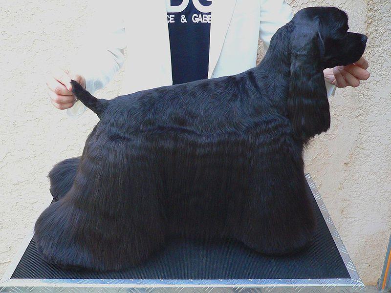 Dog Grooming Classes In Red Deer