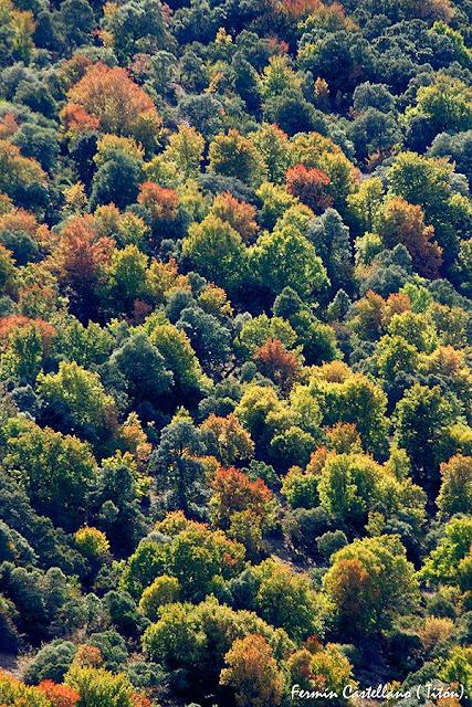 zona de transición entre la vegetaciónde diferentes ambientes climáticos