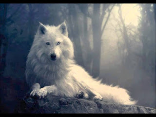¿Prefieres cazar en manada o eres un lobo solitario?