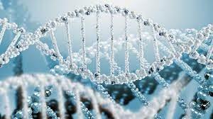 ALIMENTACIÓN Y REGENERACIÓN DEL ADN