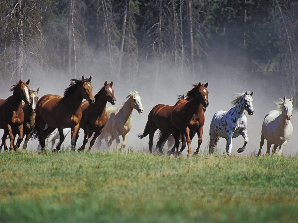 http://4.bp.blogspot.com/-onpE5EDPQqs/TdxkdsXT4bI/AAAAAAAACCg/bDAAPmYj5IA/s1600/horses-running-wallpapers_12569_102.jpg